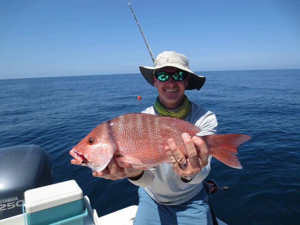 Red Snapper are everywhere!
